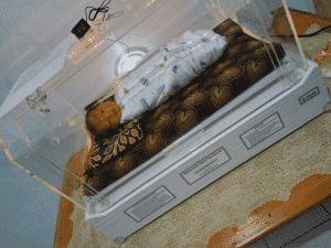 bayi rafisqy Bayi Rafisqy Peminjaman Untuk Bayi Rafisqy